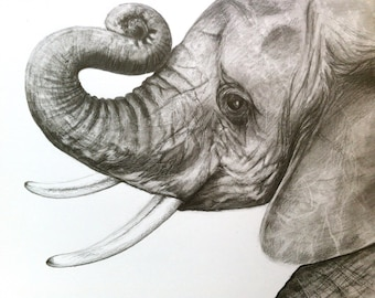 Print - Baby Elephant Head Drawing in Graphite