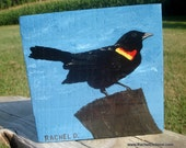 Securing the Perimeter- red winged blackbird- is an acrylic on wood original painting by artist Rachel Dickson.