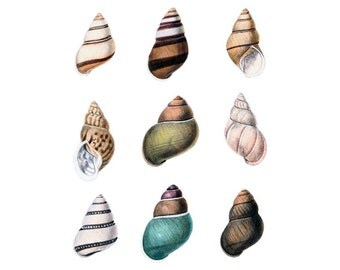 SEASHELL set Instant Download Digital Downloads printable shells, seashell clipart illustration 269