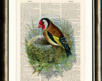 Buy 3 get 1 FREE Goldfinch  Bird and Nest - vintage image printed on a late 1800s Dictionary