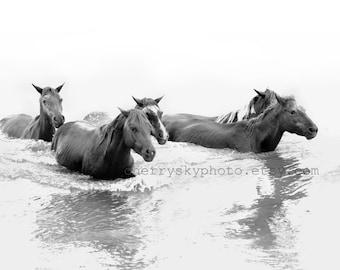 Wild Horses 1 - Swimming - Rustic Country Sea Shore Ocean Beach Assateague Island Black and White Pony Mare Stallion Wall Art 8x10 Photo