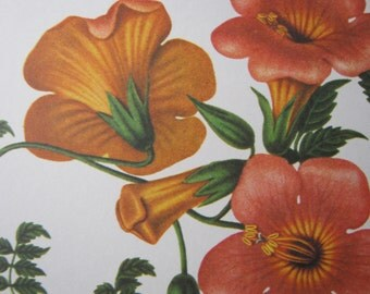 Vintage flower print trumpet vine orange yellow West Germany 1970s
