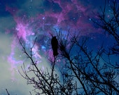 Wish Upon A Star Fine Art Photography Print - Bird on a branch silhouette looking up at the starry sky at night Home Decor Photograph