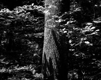 Brambles and Trees, Fine Art Photography, Black and White Photograph, Landscape Photography, Nature Photography