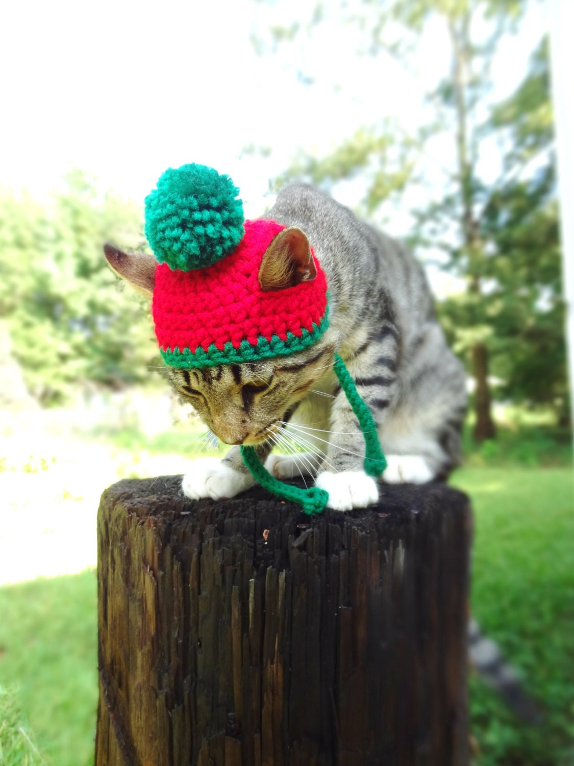 Christmas Hat for Cats Christmas Cat Hat Christmas Toboggan