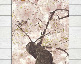Sanctuary  - Photographic Print - Pink, Cherry Blossom, Spring, Festival, Nursery, Baby, Japanese, Decorative, Photography, Decor, Art, girl