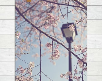 Walk With Me  - Photographic Print - Cherry Blossom, Spring, Nursery, Baby, Girl, Romantic, Blue, Sky, pink, shabby, cottage, decor, art