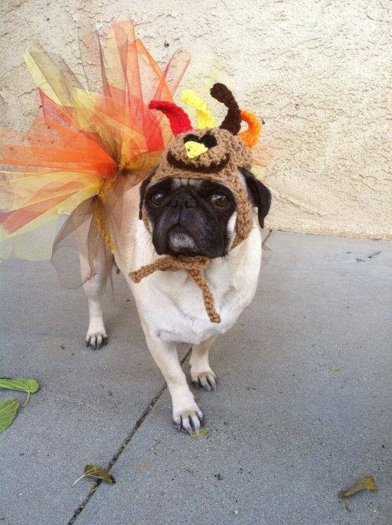 thanksgiving pug thanksgiving turkey hat tutu by pugsngiggles on etsy 2290