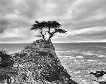 "Black and White Photography - tree overlooking Pacific ocean, black and white landscape, ocean wall prints, home decor, tree photo - ""Never"""