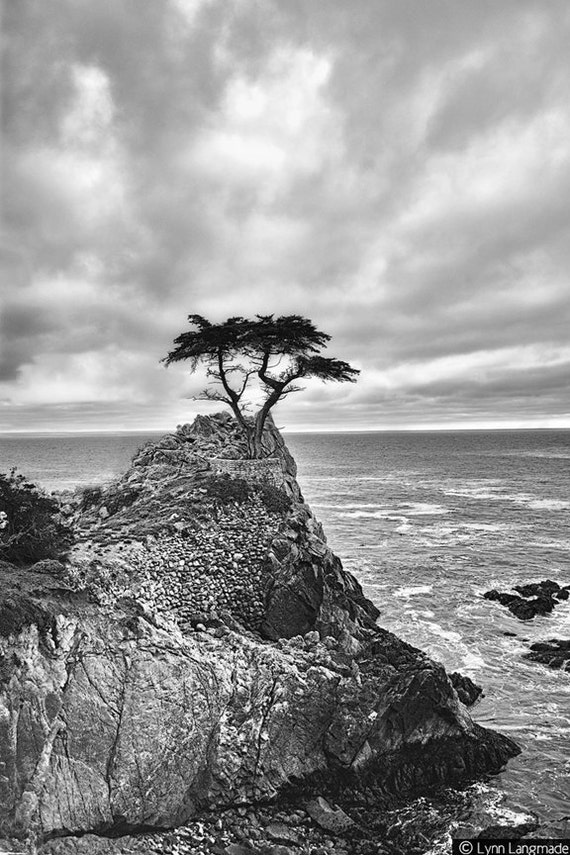 black and white photography tree overlooking pacific ocean. Black Bedroom Furniture Sets. Home Design Ideas