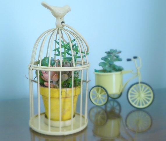Birdcage Planter: Birdcage Succulent Centerpiece Vintage Birdcage Succulent