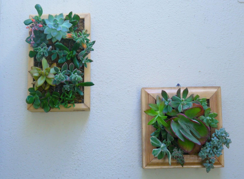 Vertical succulent planter living wall art kit vertical for Living wall planter