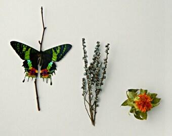 Gift for the DIYer, Kits and Tutorials, Butterfly Terrarium Kit, Sunset Moth, Eco-Friendly, Green, Moss Terrarium, Nature
