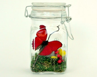 Butterfly Terrarium Kit, Real Butterfly in Glass Jar, Red and Yellow, Moss Terrarium, Nature