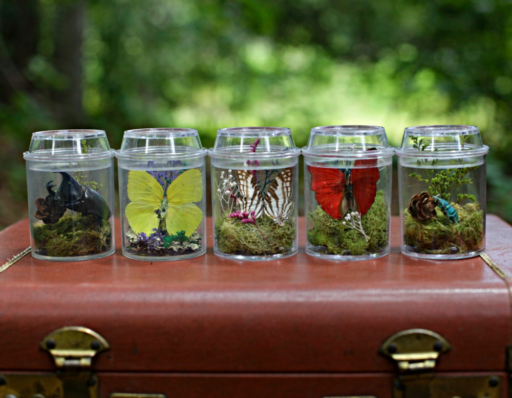 Terrarium Kits For Children Butterfly And Insect Decor