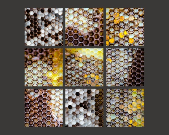 Honeycomb Macros. Beekeeping. Apiary. Honey Bees. Nature Photography. Set of nine unmatted, unframed 4x4 Fine Art Prints..