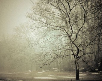 Winter Mist Nature Photograph - Foggy -  Mysterious - Winter Tones - Pale Winter - Bare Trees - Nature Landscape Photograph
