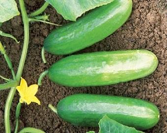 Cucumber mini seeds , organic cucumber seeds, heirloom seeds,  easy to grow seeds, code 13, gardening
