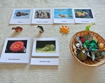 Montessori Sea Life Creatures and matching 3 Part Cards Set
