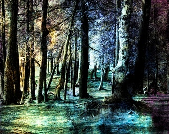 Enchanted Photography, Enchanted Print, Enchanted Forest, Enchanted Photo, Enchanted Wall Art, Enchanted Night, Enchanted Photo, Enchanted