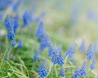 Floral Photography, Flower Photography, Home Decor, Nursery, Living Room Art Blue Hyacinth ,  Flowers, Floral Decor, Shabby Chic ,HomeWall,