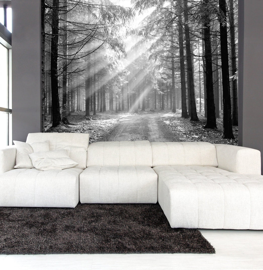 Wall mural black and white of coniferous forest in the early for Black and white forest wall mural