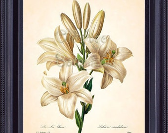 REDOUTE Antique Botanical Print Large White LILY Flower 8x10 Art Print Interior Design Home Wall Illustration Mixed Media Room Decor  BF1320