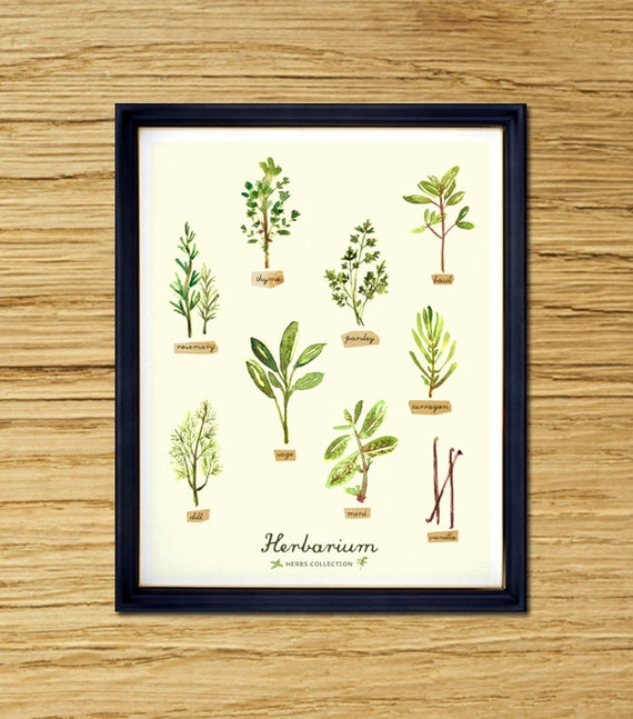 Kitchen Herbarium Art: BUY 2 GET 1 FREE Herbs Watercolor Painting Kitchen Art By
