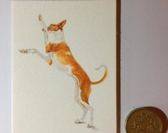 Little Podenco Prance. Aceo original. 2.5x3.5. Coloured Pencil