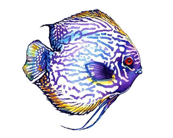 Purple Discus Fish Watercolor Illustrations Art Print Poster