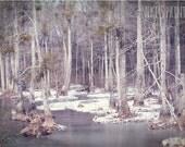 Snow Swamp 5x7 Photographic Print Winter Wonderland Forest Ice