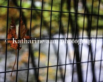 Fall Photograph / Lake Placid Photograph / Adirondack Photograph / Autumn Photograph