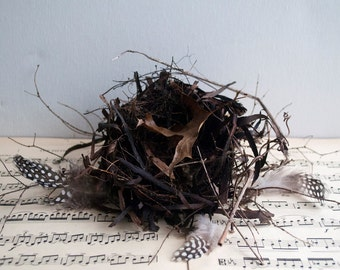 Bird nest, natural found object for spring decor, twigs grass and leaves