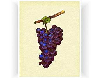 Botanical Art Grapes Kitchen Decor Print