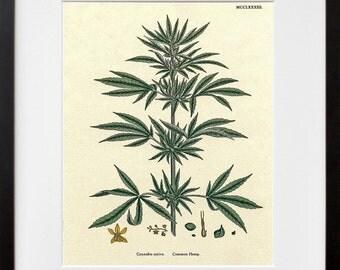 Cannabis Art Hemp Plant Wall Decor