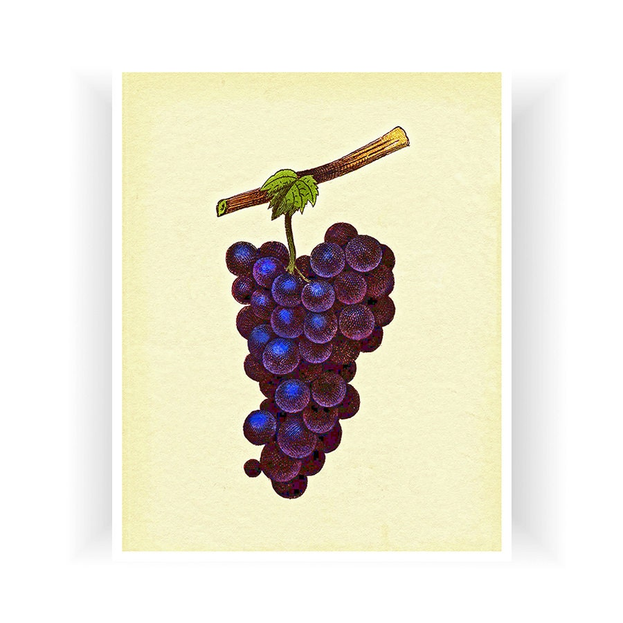 Https Www Etsy Com Listing 173363056 Botanical Art Grapes Kitchen Decor Print
