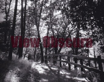 Sun Dappled Path Limited Edition Signed and Numbered Photograph