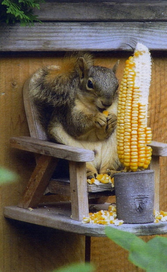 Squirrel feeder by CarlsonWood on Etsy