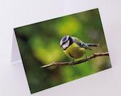 Blue tit bird photo greeting card