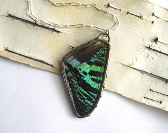 Green Moth Wing Butterfly Necklace- Green Sunset Statement Jewelry, full wing under glass, nature green black zebra stripes sterling chain