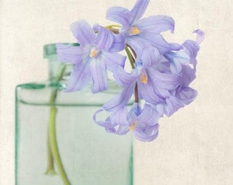 Flower Photo, Spring Flower Photography Print, Floral Art Print, Blue Flower, Wall Art, Home Decor, Nature Wall Art