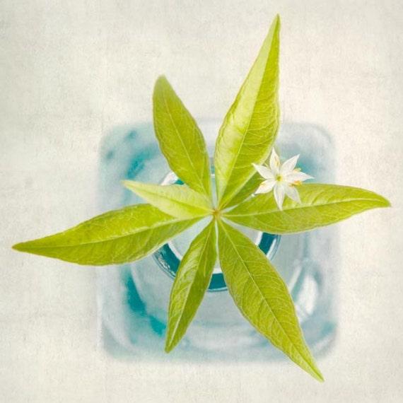 Botanical Art Print, Flower Photograph, Shabby Chic Artwork, Flower Print, Flower Wall Decor, Nature Photography, Starflower
