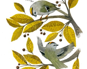 Golden Crowned Kinglet - 11 x 14 inch Archival Inkjet Print (Giclée)