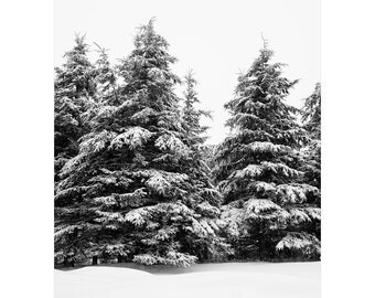 Winter Landscape Photography - Tree Wall Art - Winter Black and White Evergreen Trees - Winter Nature Prints - Cabin Decor - Large Art