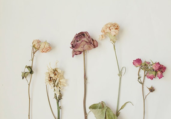 Dried Floral Arrangement Still Life Photography 8x10 Home Decor Wall Art Decor Nature Decor Garden Photography Horizontal