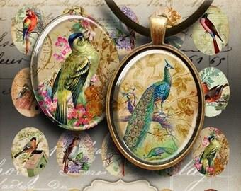Printable Download ANTIQUE BIRD OVALS 30x40 mm Images Digital Collage Sheet for pendants magnets bezel settings vintage Art Cult images