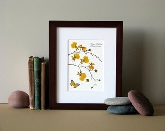 "Pressed flower print, 8"" x 10"" matted, Orchids, gold, botanical art, yellow butterfly, no. 016"
