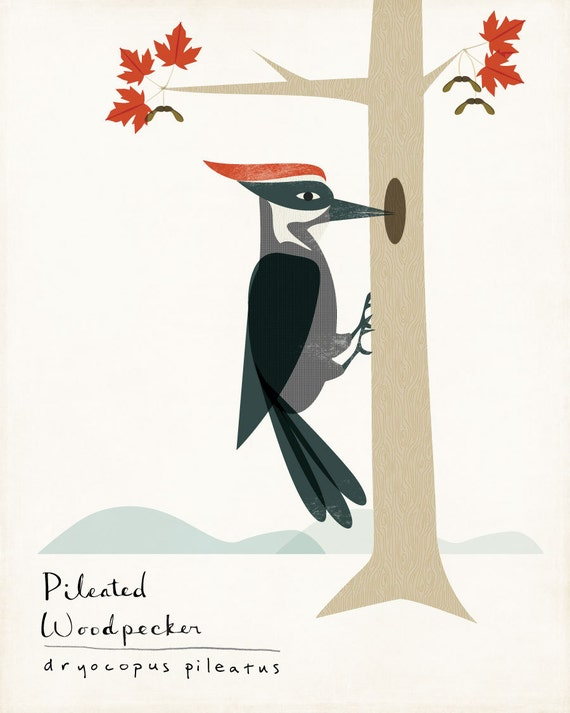Pileated Woodpecker Limited Edition Print