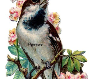 Bird and Flowers Downloadable, Printable Digital Art Image Instant Download