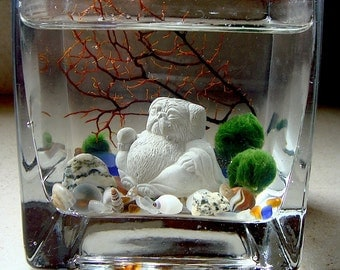 Live Marimo Balls and Mini Pug Buddha Mini Aquarium / Terrarium Desk Plant